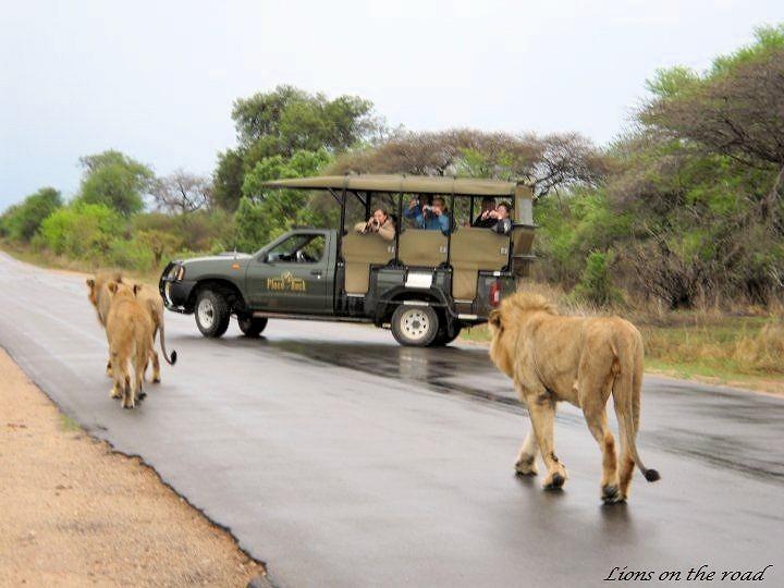 Kruger Park Safaris 1