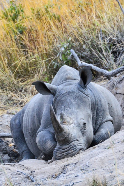 Kruger Park Tour 6